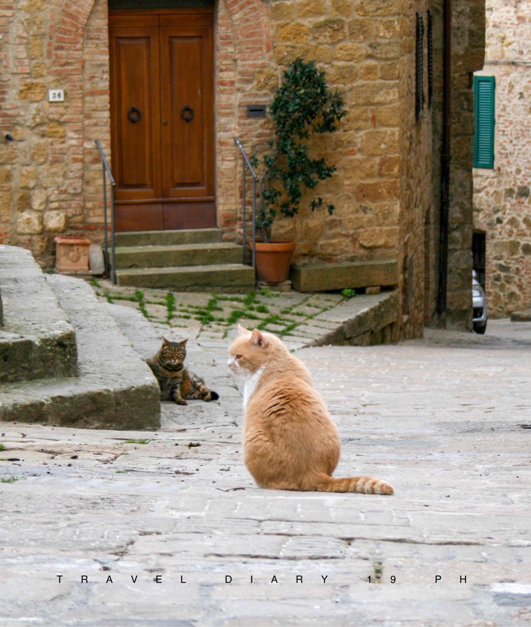 Tra i pochi abitanti di Monticchiello, ci sono anche i suoi gatti