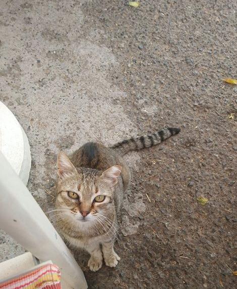 Un gatto di Khytira